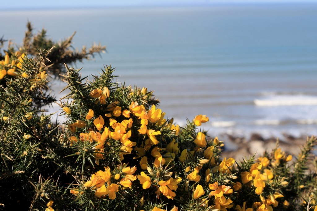 Brighton und North Devon (10)