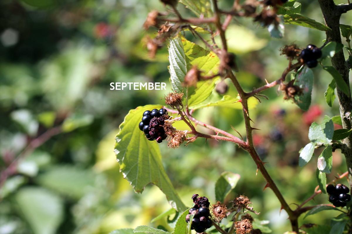 September lieblinge