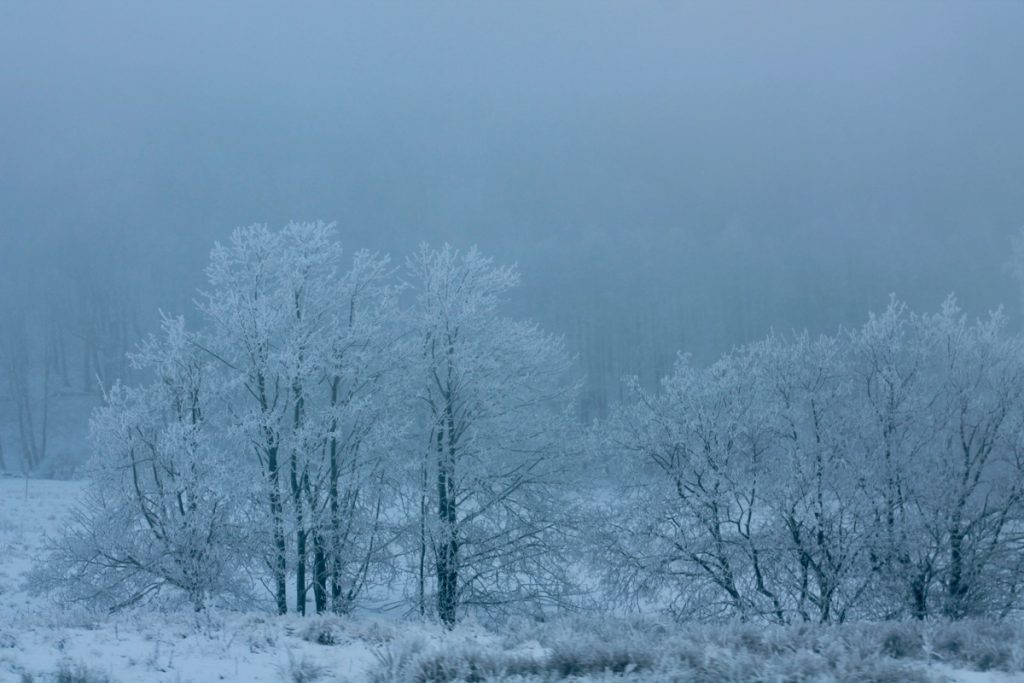 winterwonderland45