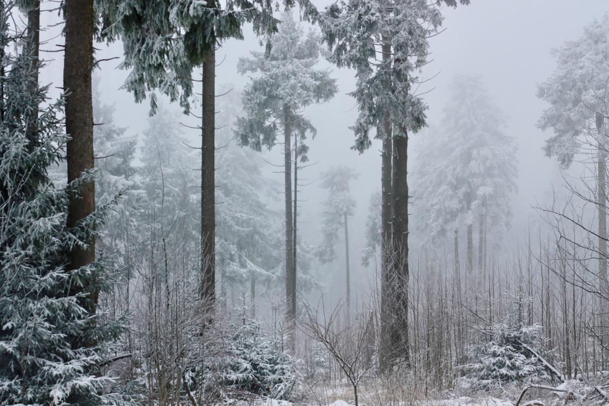 winterwonderland63