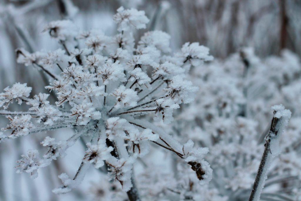 winterwonderland82