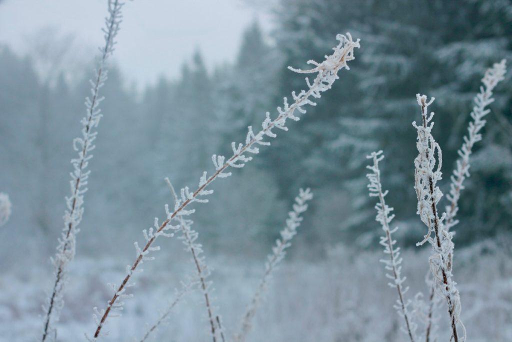 winterwonderland86