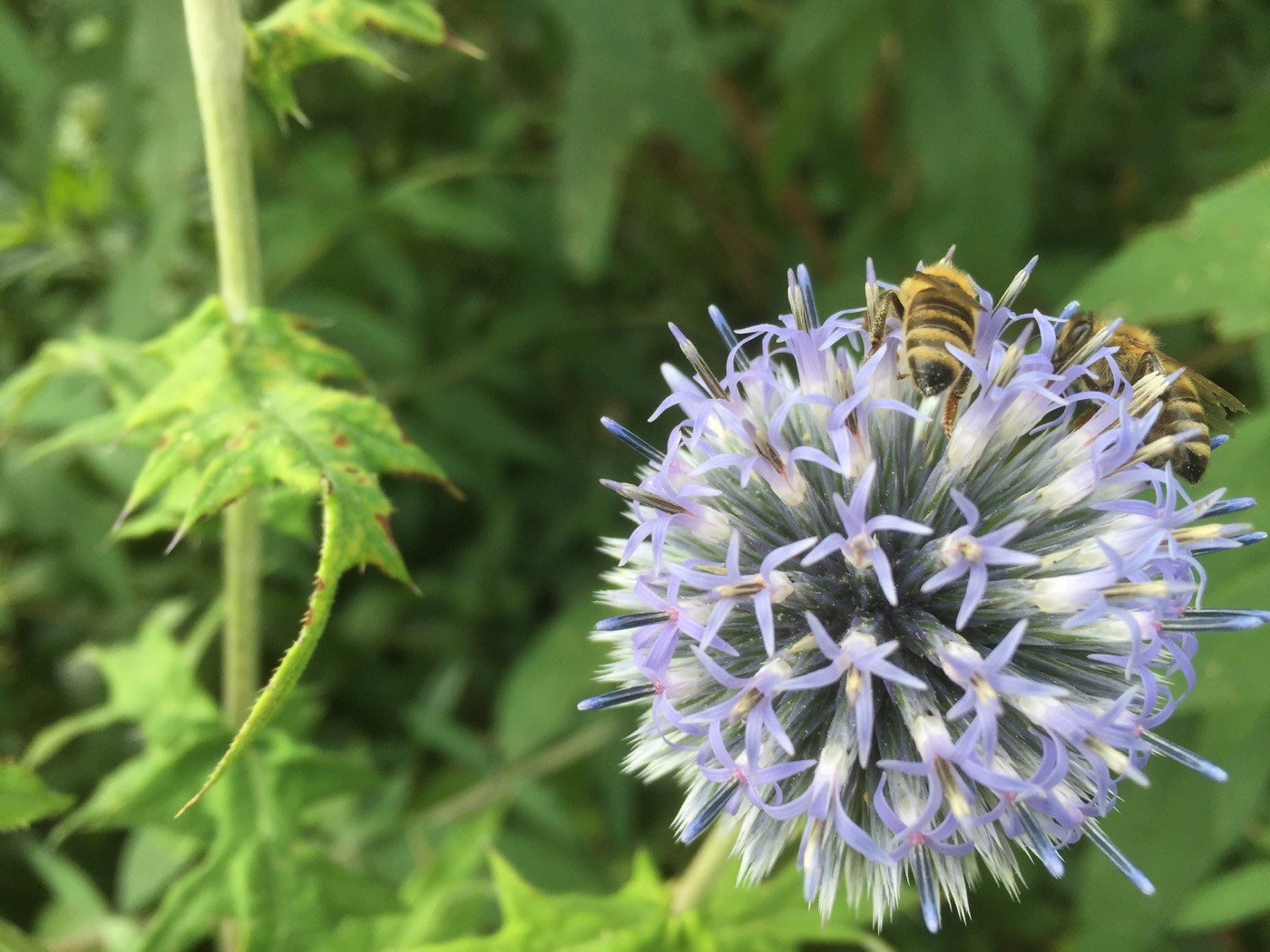 Bienen helfen - Bienen retten
